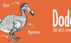 vl dodo