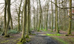 Sibley's Coppice at Great Missenden (picture by Mark King)