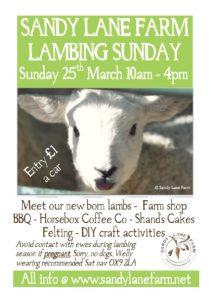 Lambing Sunday @ Sandy Lane Farm | Tiddington | England | United Kingdom