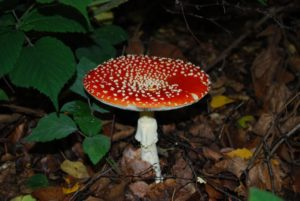 Mushroom Magic: A UK Fungus Day event @ Bucks County Museum | England | United Kingdom